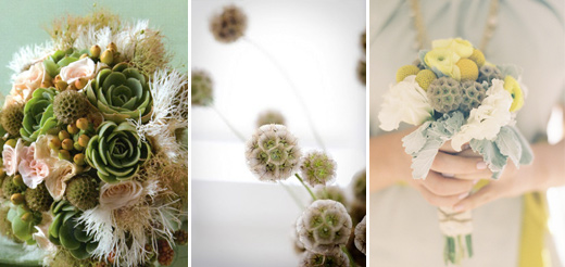 2011 wedding trend scabiosa pods